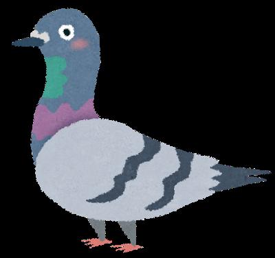 鳩.png